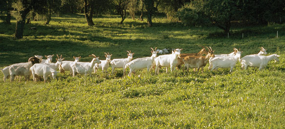 Die Ziegenhöfe in Kraase und Regow bieten nicht nur verschiedene Käsesorten.
