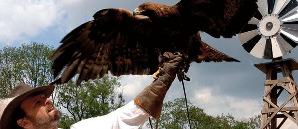 Tägliche Programme wie Greifvogelvorführungen lassen die Western-Welt lebendig werden. Foto: EL DORADO Templin